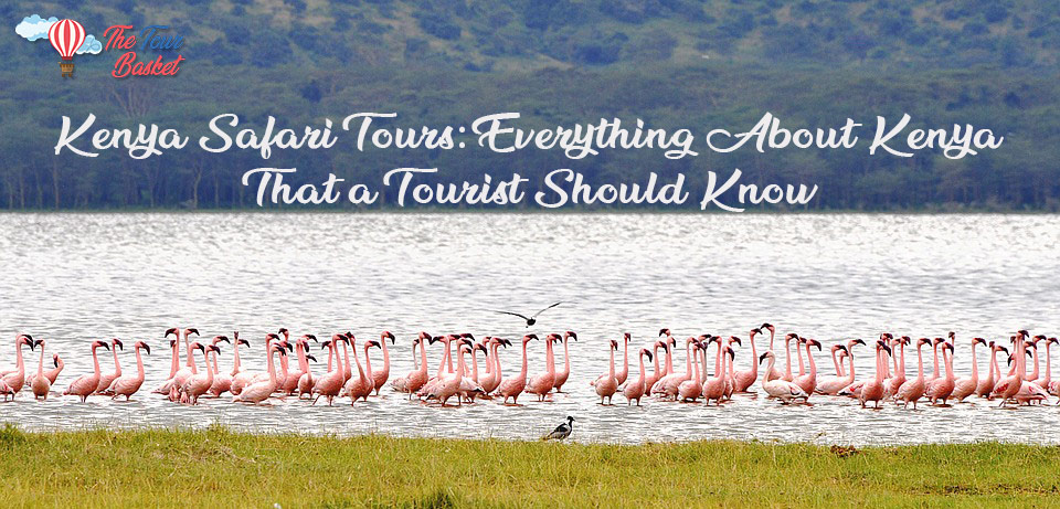 Kenya Safari Tours: Everything About Kenya That a Tourist Should Know