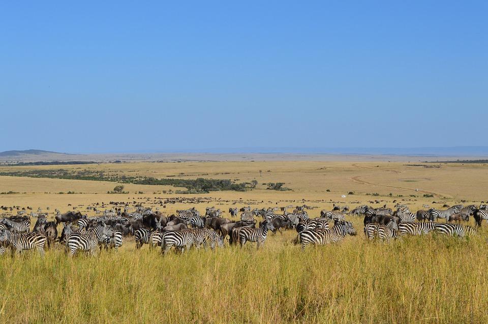 masai mara migration 2019